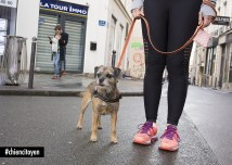 JolieBorderTerrierParis2