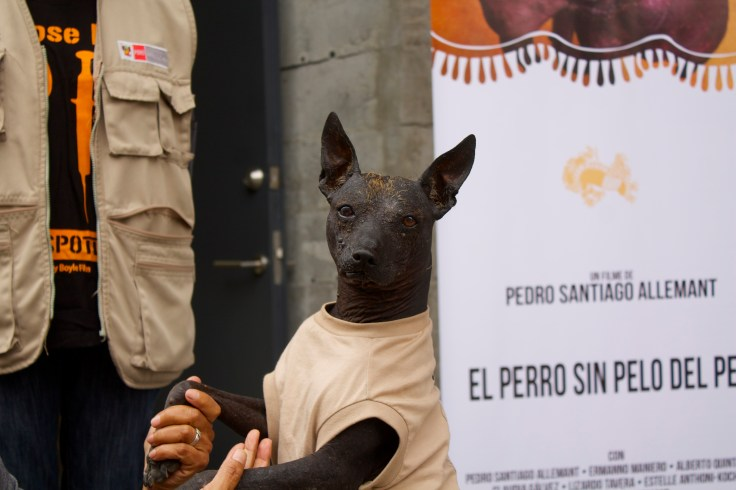 Túpac: Can del Museo de sitio de Pachacamac y uno de los protagonistas del filme. Es activo y muy enamorado. Se muestra agradecido con quienes lo atienden y le hacen cariño y es admirado por miles de turistas!