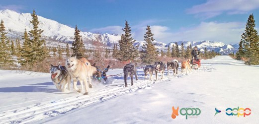 In the picture: Sled pulled by Huskies, sports practice in Canada – Design by Alessandro Pucci © 2020 APPP – ADPP