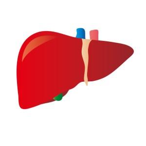 手のひらが赤い肝臓