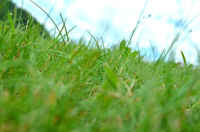 除草剤雨効果撒き方