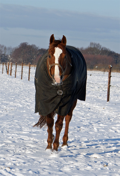Jac in de sneeuw