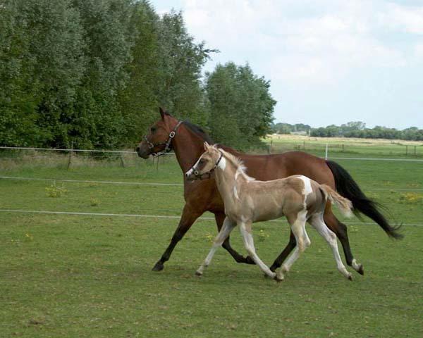 Moederliefde samen rennen