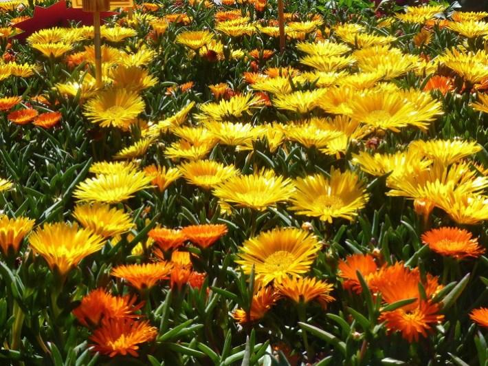 flowers-orange