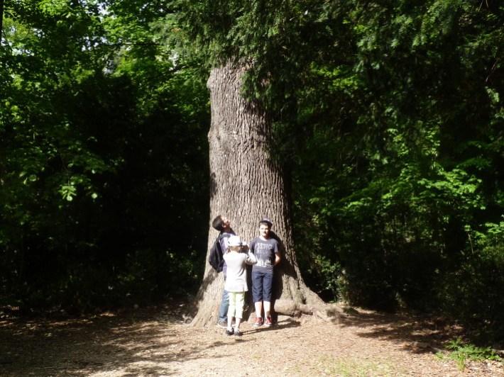 arbre-geant