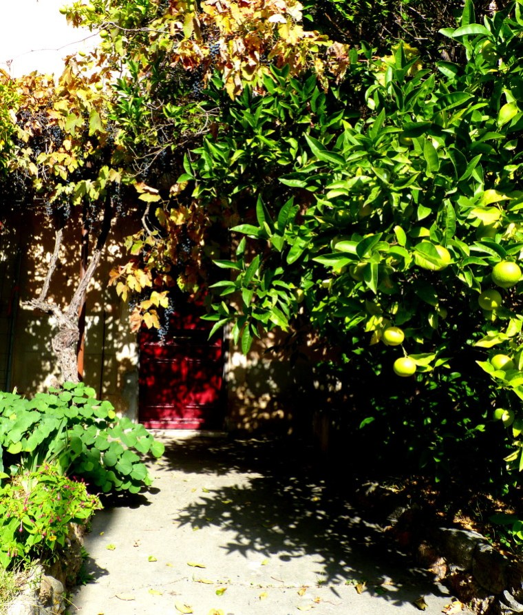 jardin touffu
