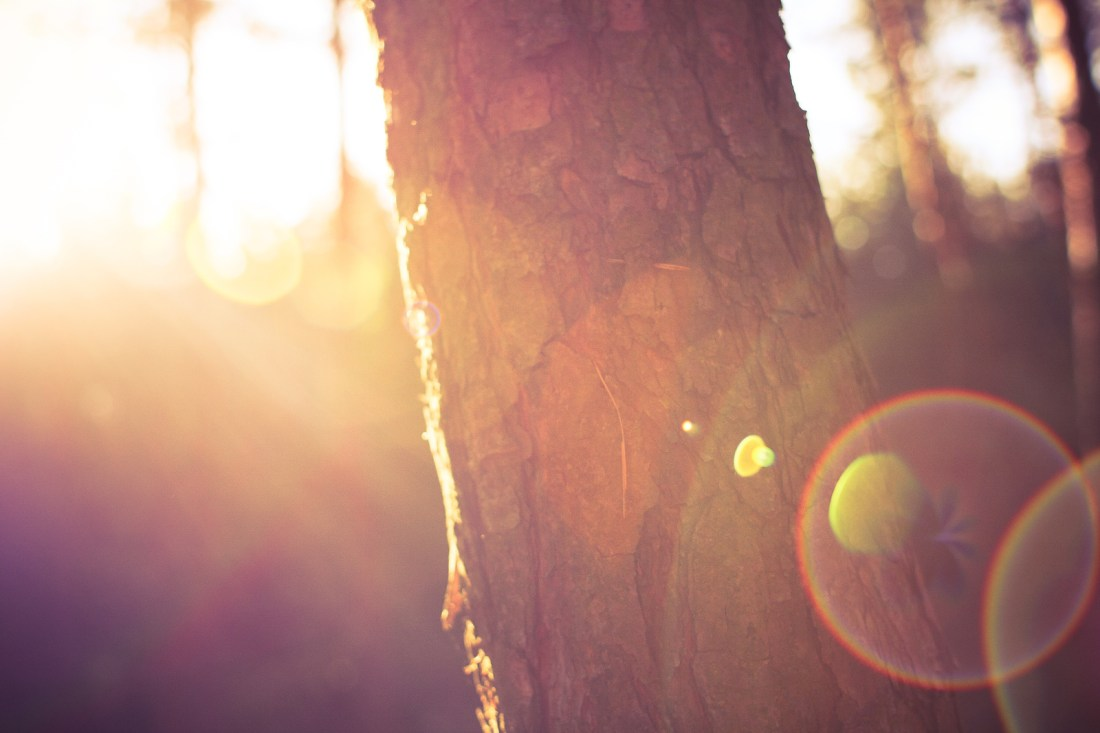Entourer un arbre de ses bras....