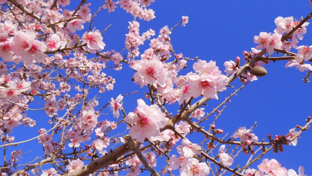 ob_c95f0e_blossom1-1