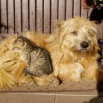 resting cat and dog