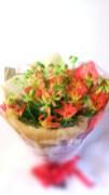 商品番号【210028】参考価格¥10800 Xmasと言えば【赤】のイメージですがこちらは【グロリオサ】のみの花束です。お希望の方は予約が必要ですお問い合わせください。