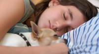 chihuahua sleep with women_result