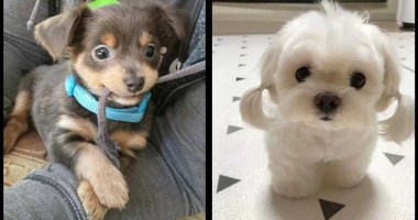 20-More-Puppies-That-Will-Fill-Your-Heart-With-Love-Faster