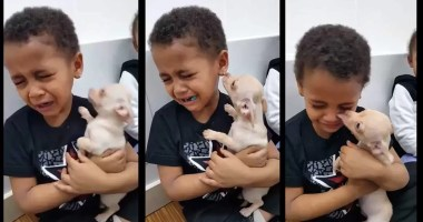 boy-crying-over-chihuahua-love