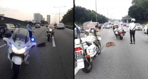 Cops rescued injured dog laying across Federal Highway