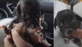 Malformed Puppy Rejected By Her Mom And Owner Is Discarded