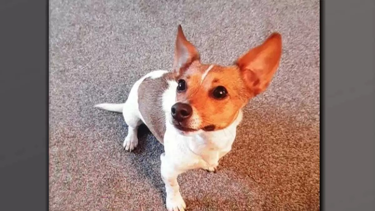 Urgent appeal as van containing puppy stolen in Burntwood