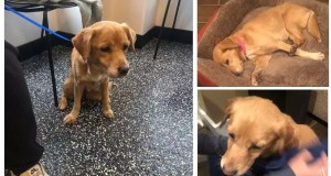 Guy Wakes Up And Finds A Random Dog In Need Of A Family In His Living Room