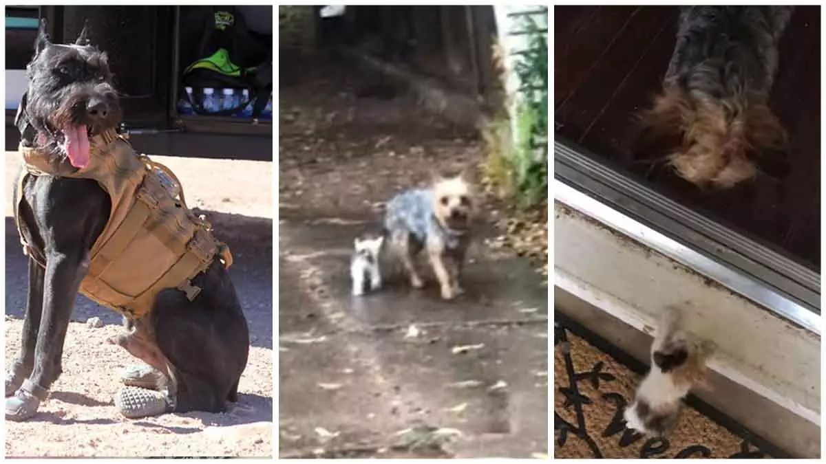 Dog Unearths Deserted Cat in Downpour During Potty Break and Aides Her to Her Home for Shelter