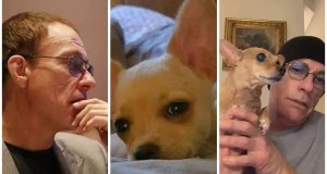 Genuine Hero: Van Damme spares dog condemned to death