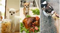 Healthy-People-Foods-You-Can-Give-Your-Dog-