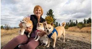 Hiking with dogs: Busy paths underscore the need for respectful pack ambassadors