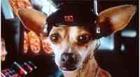 Kamala Harris' Lawyer Husband Won Taco Bell Chihuahua Lawsuit With Dogged Pursuit
