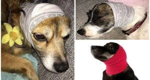 Student reveals how to keep your dog calm on bonfire night by re-purposing a sock as a comforting ear muff