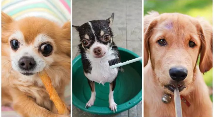 The Best Dog Toothbrushes - Full Guide and Review