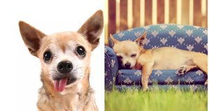 The Chihuahua Issue - America was in Emergency?