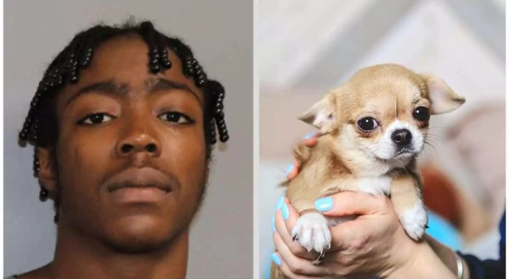 The-youngster-stepped-his-moms-pet-Chihuahua-to-death-at-that-point-went-to-see-his-friends