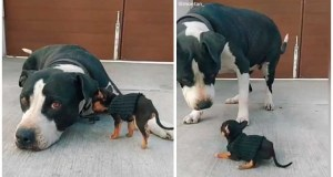Viral TikTok: dog meets the baby chihuahua that her owner adopted...