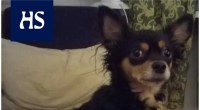 Animals Riina's dog jumped alone in the metro in Itäkeskus – a desperate operation to find the dog began, which ended happily at the Animal Shelter