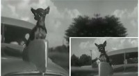 Apparently, GM thought it was OK for your dog to be a hood ornament in 1935