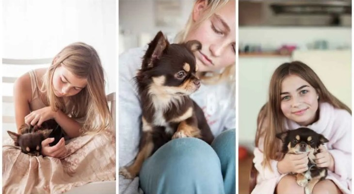 Chihuahuas-knee-issues-will-expect-the-medical-procedure-to-address-them
