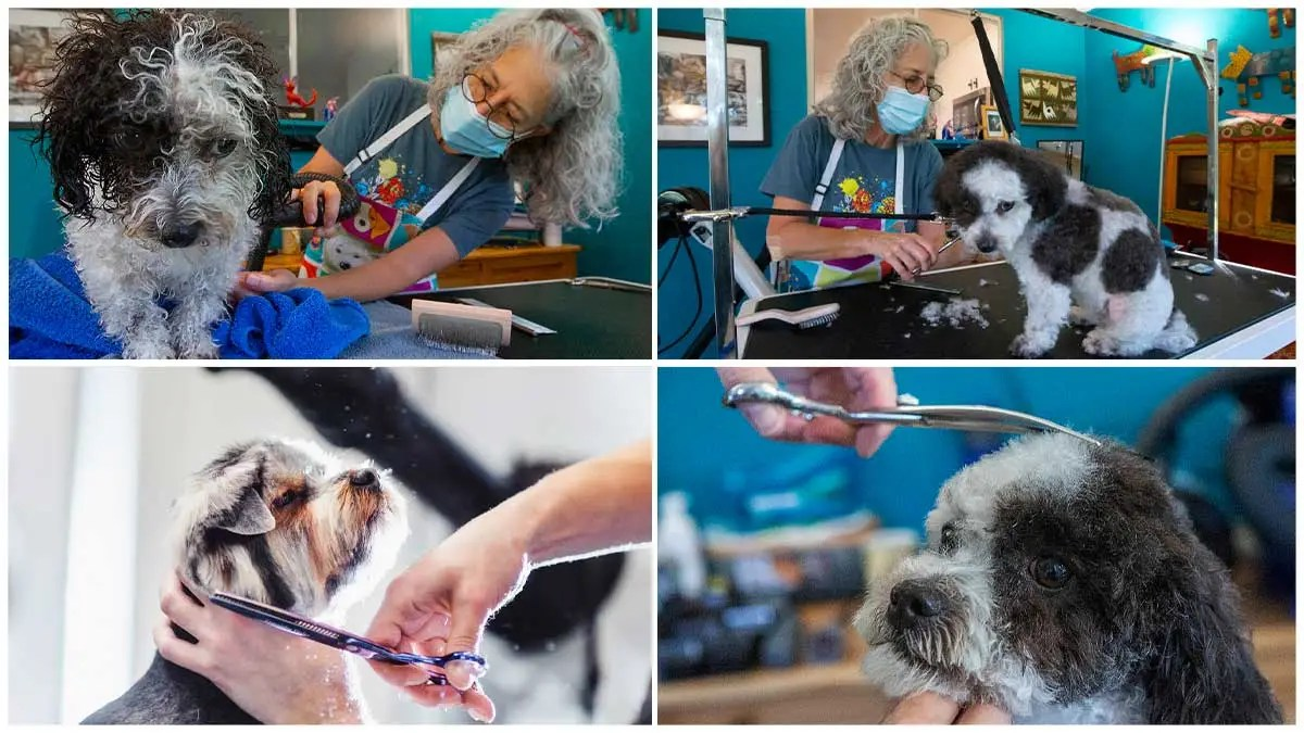Dog days for Sonoma pet grooming