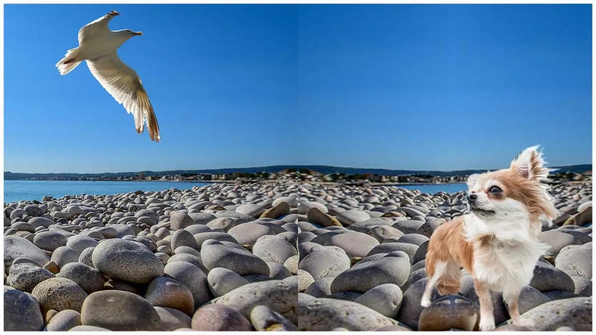 Dough! Seagull steals doughnut from woman's hand as she holds it up to take an arty photo
