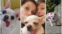 Fairy Tail Ending for a Princess Chihuahua