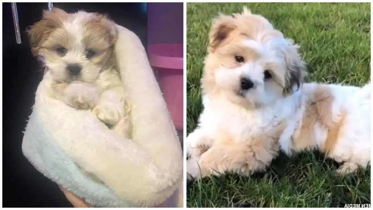 Heartbroken owner of missing puppy gets a message from a stranger saying they've found the dog but WON'T give it back