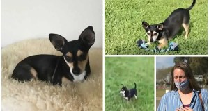 Local woman's dog held for ransom later found dead at the local park