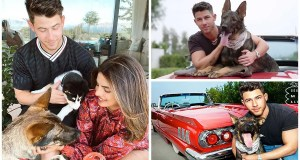 Nick Jonas Jokes He and Priyanka Would Be 'Proud' If Their 3 Dogs Became 'More Famous Than Us'