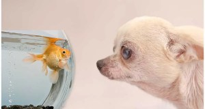 Can Dogs Live with Fish?
