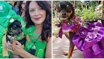 From Wags to Riches: One Pup's Fashionable Journey to Superstar Status