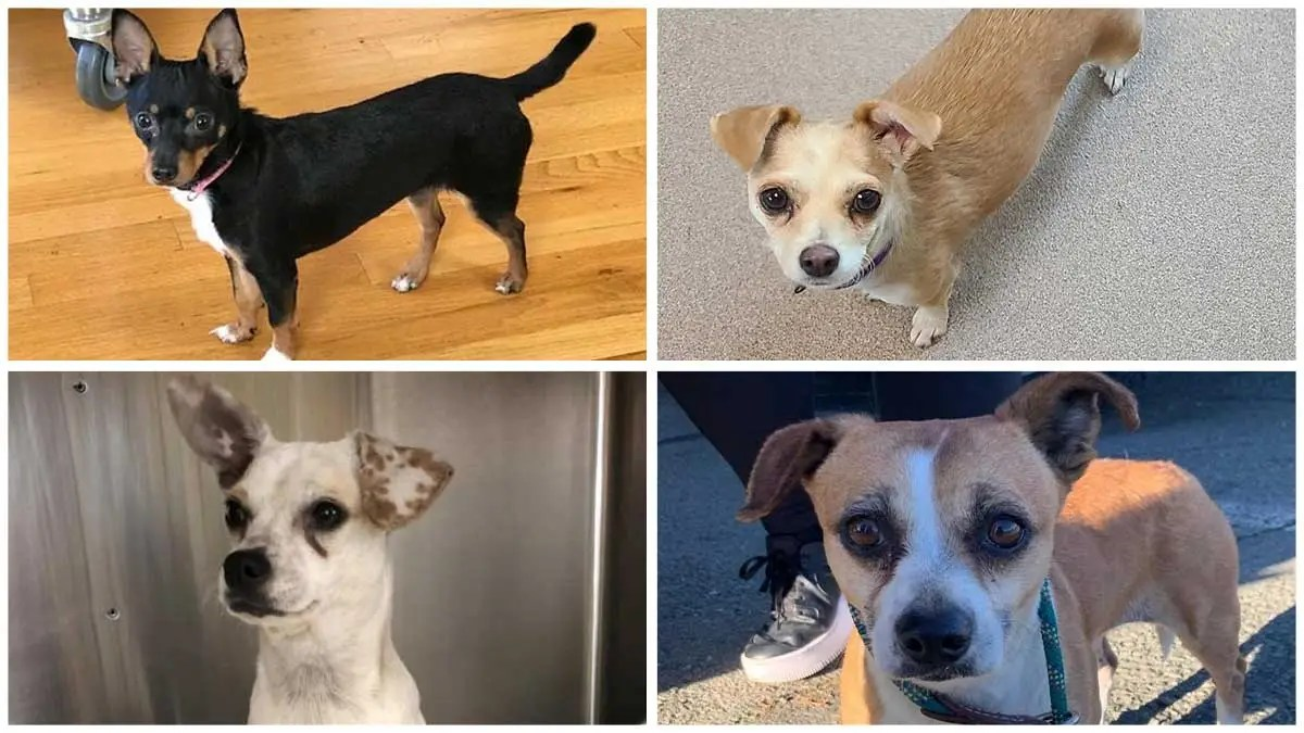 Latest Pets Up For Adoption At San Mateo Area Shelters