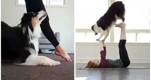Ten Top Work Outs for You and Your Dog