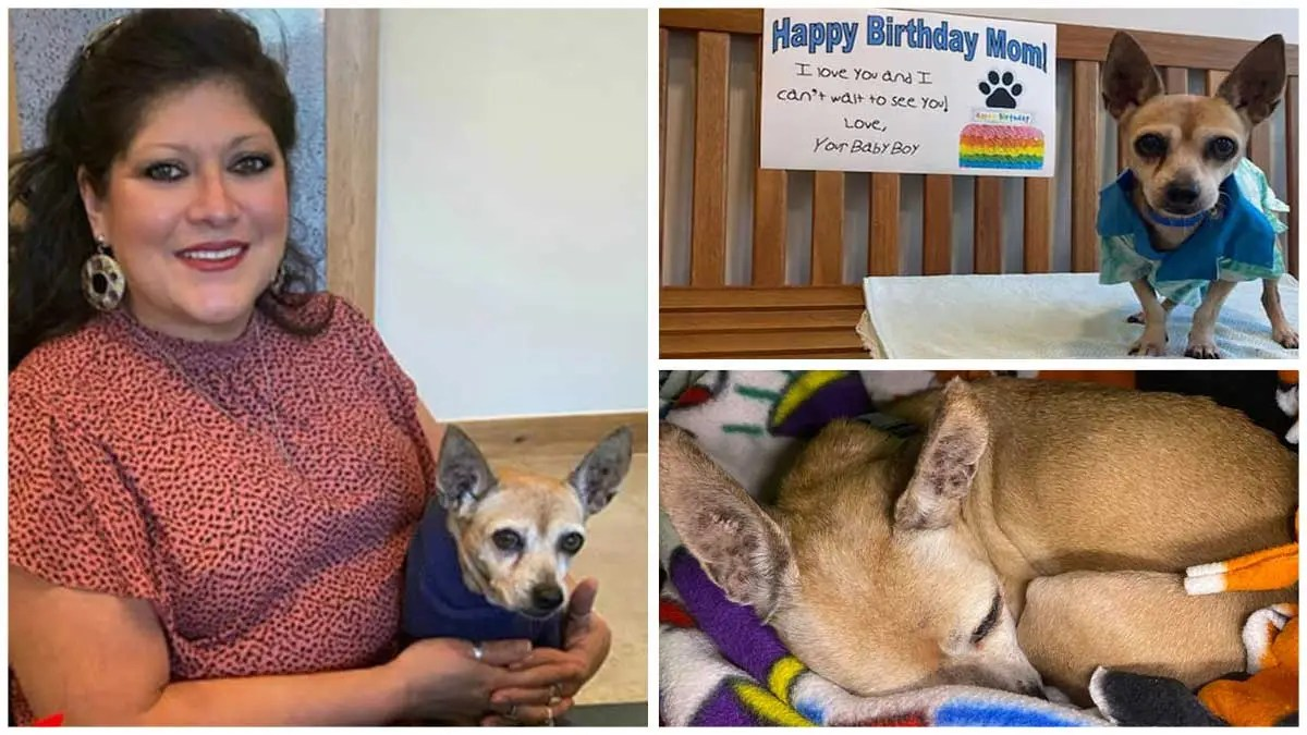 Texas woman drives 1,360 miles to reunite with dog missing for 6 years