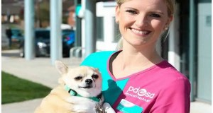 Chubby Helensburgh Chihuahua reaches final of UK's largest pet slimming competition
