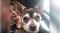 Diva dog gets teeth cleaned and kisses bad breath goodbye