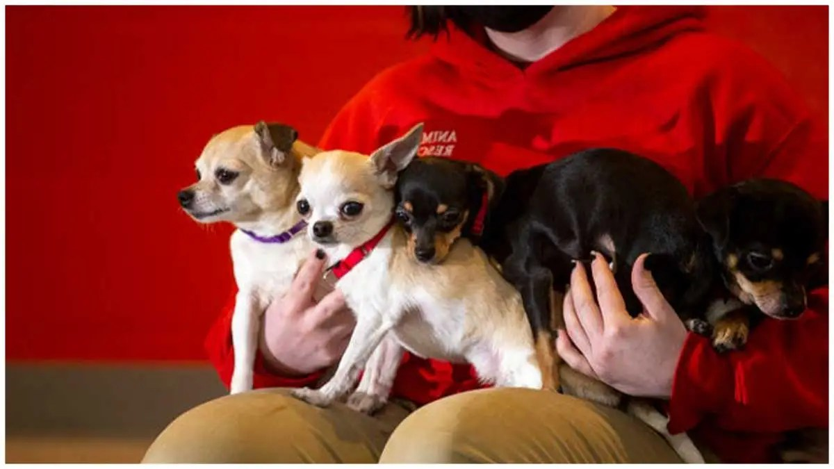 Dogs seized from Weymouth home will soon be up for adoption
