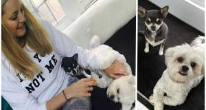 Heartbreak for Vernon Kay after Tess Daly ran over and killed beloved dog Minnie