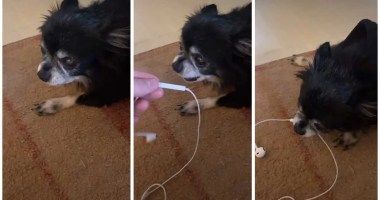 I Can't Stop Laughing at This Dog's Bizarre Noises — Watch His Viral TikTok Videos